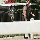 jude law horses15