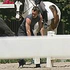 jude law horses17