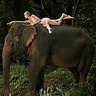 antm elephants06