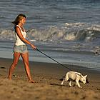 jennifer aniston dogs 12