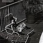 rachel bilson chicago social magazine 03