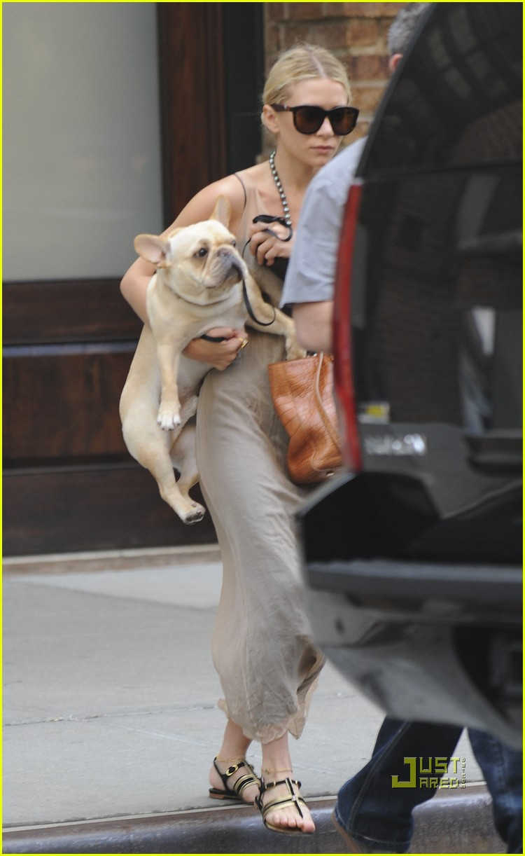 ashley olsen french bulldog 02