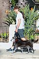 mila kunis ashton kutcher dog walking duo 12