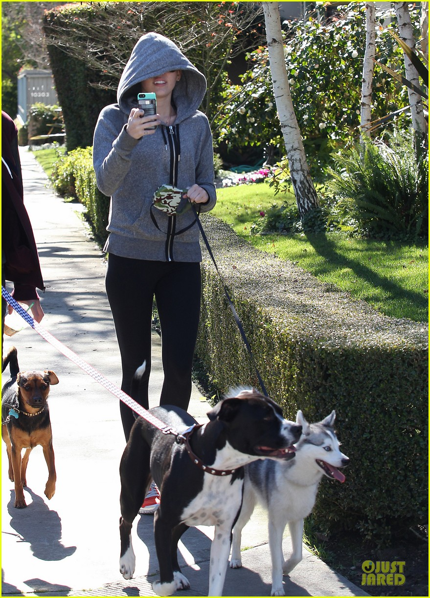miley cyrus hoodie walk with pet pooch 152800386