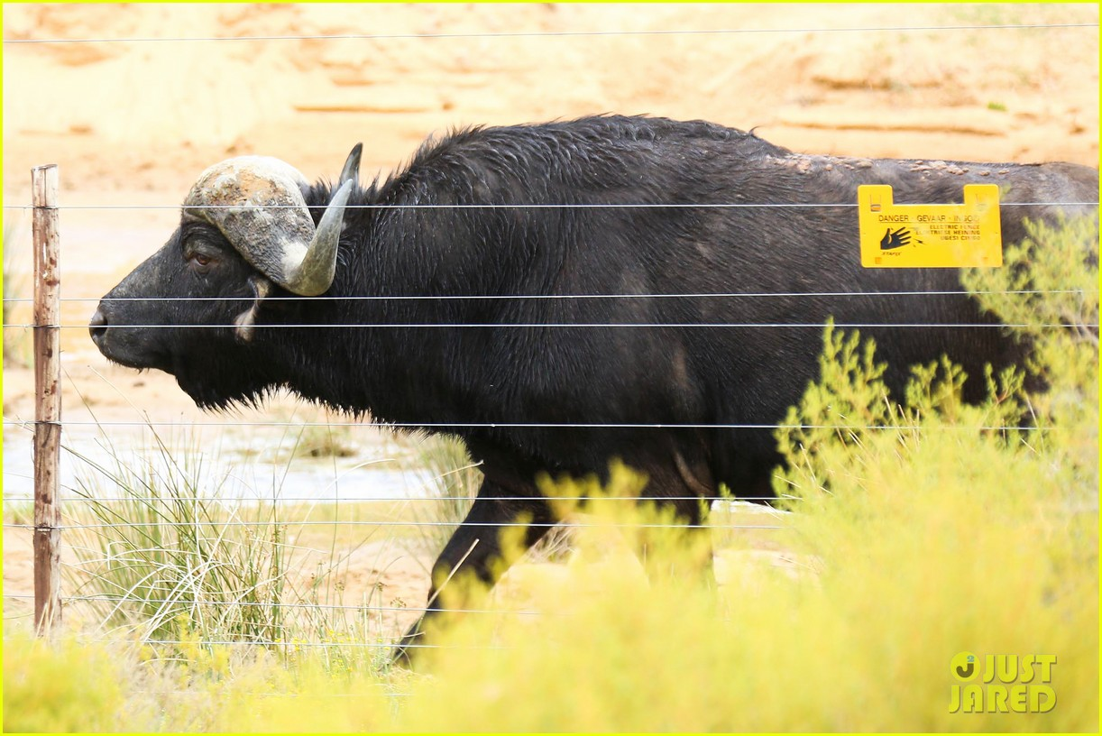 katie holmes suri enjoy safari vacation together 13