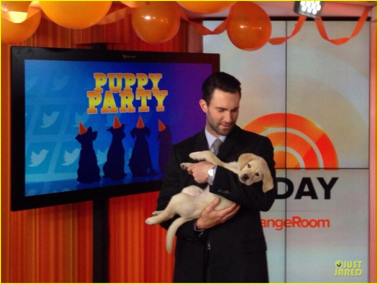 adam levine cradles cute puppy on today show 052993529