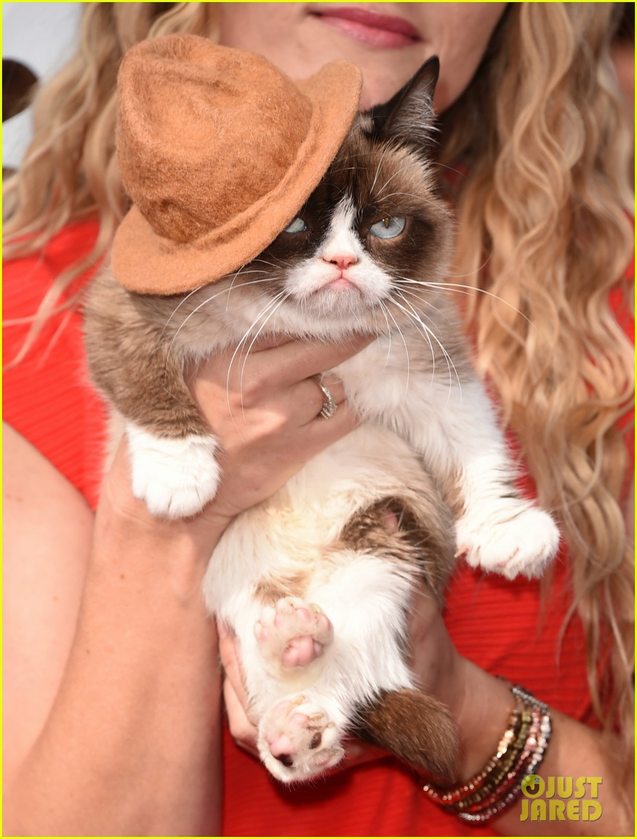 grumpy cat gets better seat at mtv movie awards 2014 than nick lachey 02