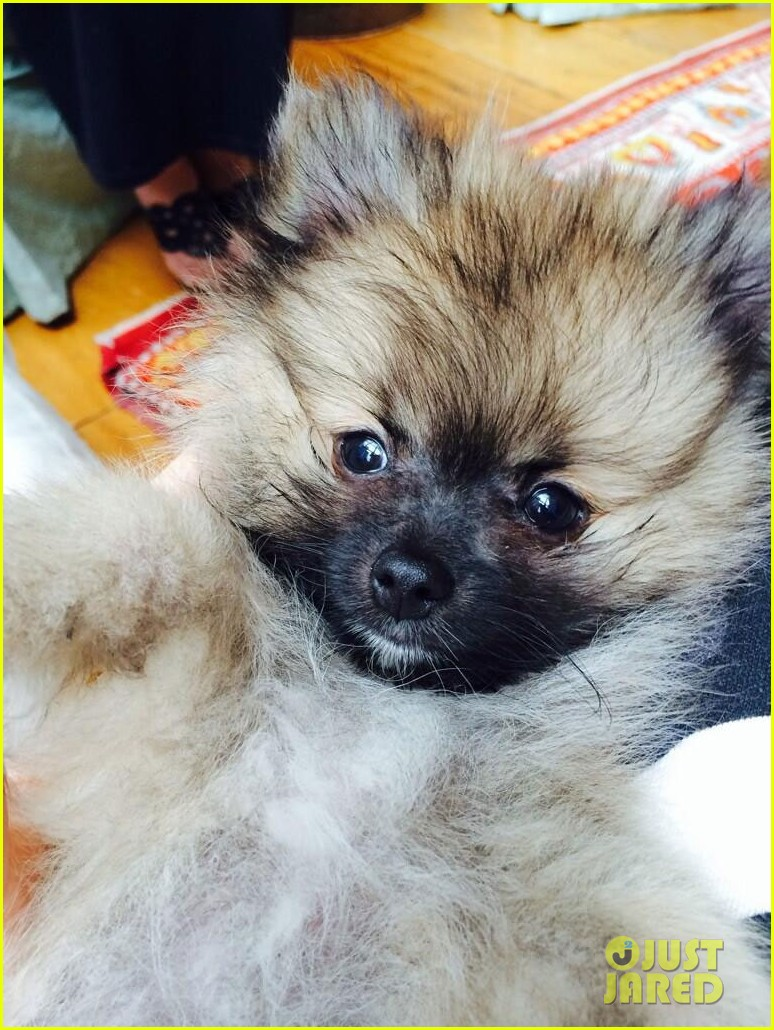 miley cyrus gets cute new puppy 01