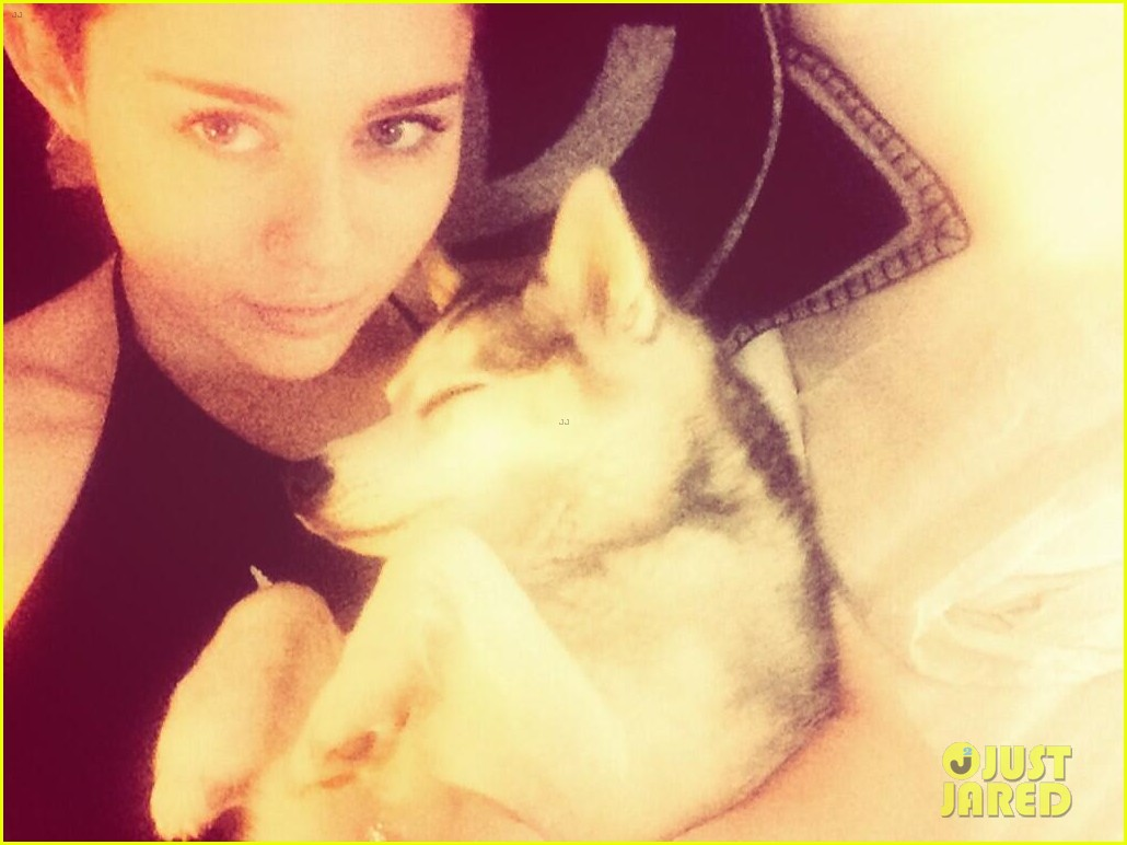 miley cyrus gets cute new puppy 023084666