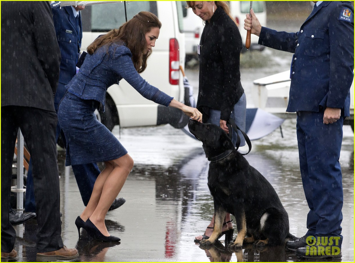 prince george makes appearance parents play with puppies 15