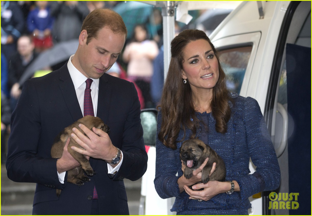 prince george makes appearance parents play with puppies 18