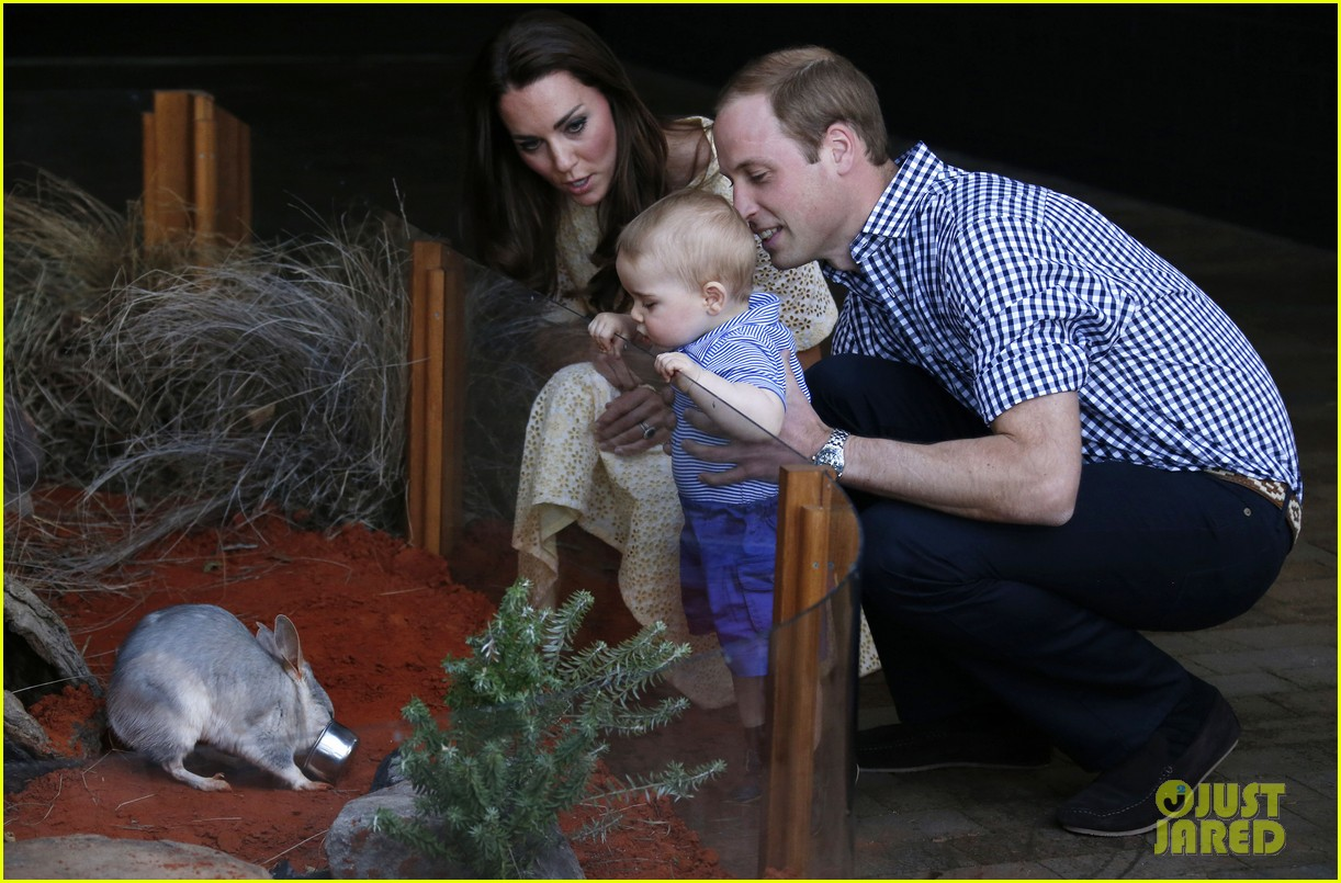 prince george goes to the zoo kate middleton prince william 053095506