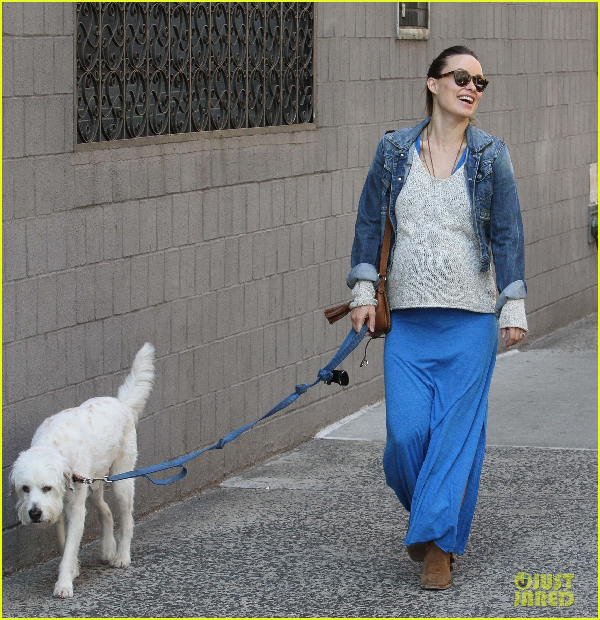 olivia wilde growing baby bump dog walk 023092176