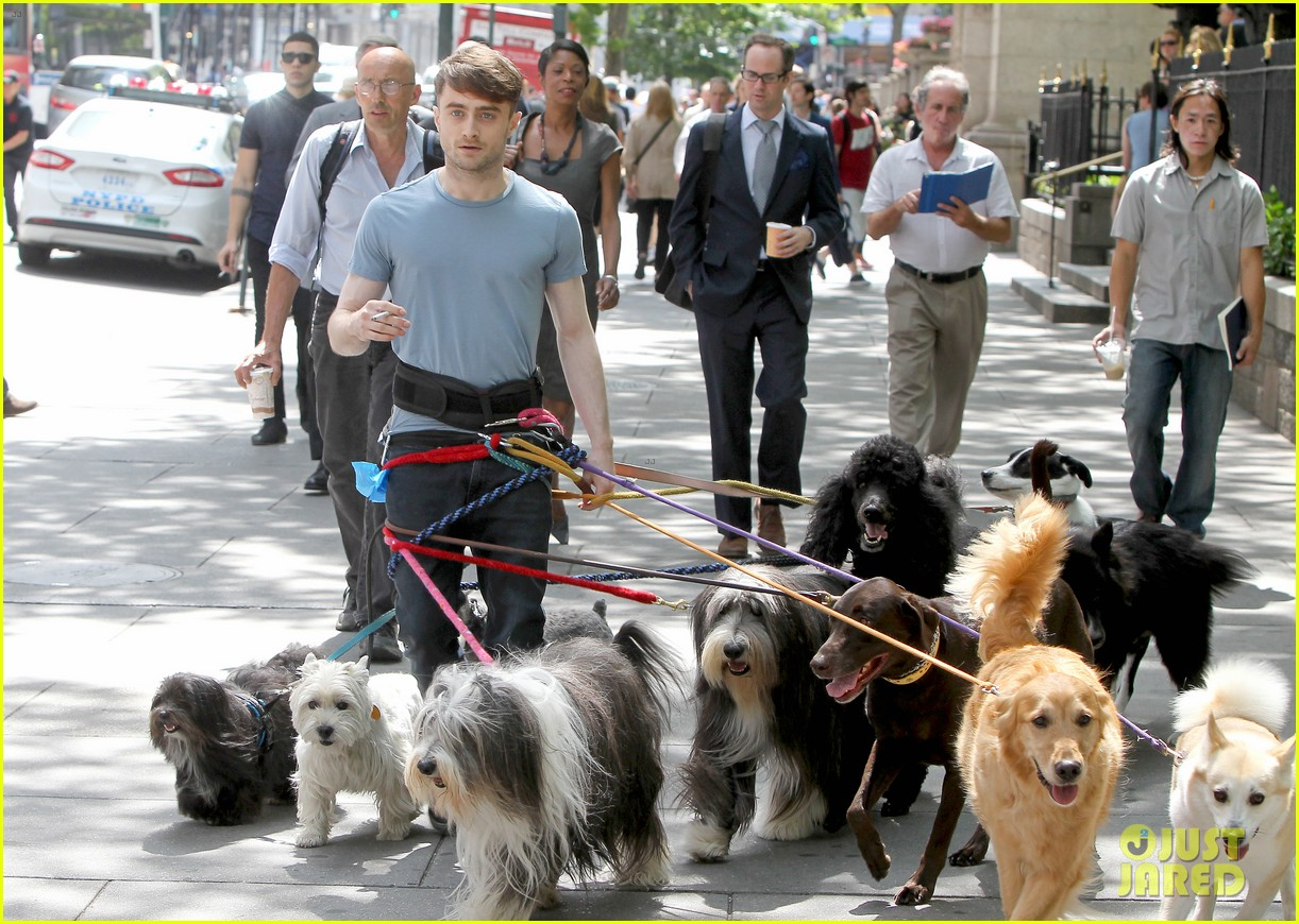 daniel radcliffe dog walker trainwreck nyc set 183147565
