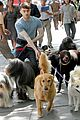 daniel radcliffe dog walker trainwreck nyc set 31