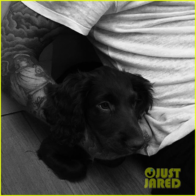 beckham family has a new puppy olive 023454080