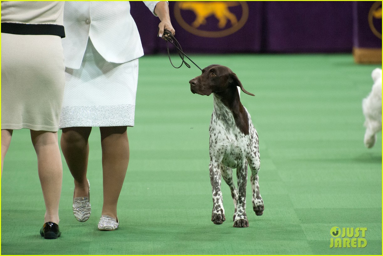 Westminster Dog Show Broadcast Schedule
