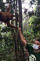 leonardo dicaprio leuser orangutang 01