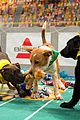 what is the puppy bowl 50