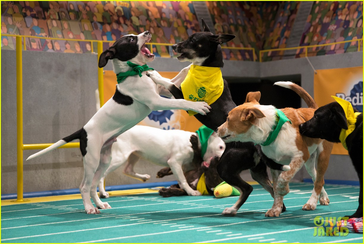 Dogs On Puppy Bowl