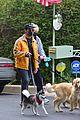 joe jonas sophie turner monday dog walk 11