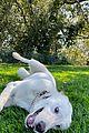 jennifer anistons dogs 02