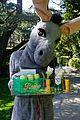 kate hudson sends alcohol and donkey to celeb friends 23.