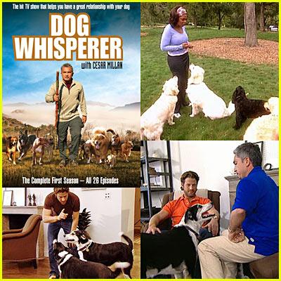 Dog Whisperer DVD Giveaway