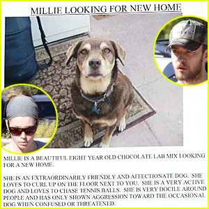 Justin Timberlake Helps Millie Find A Home