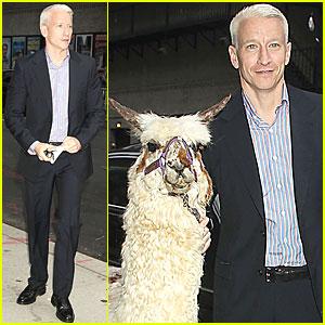 Anderson Cooper Brings Alpaca to Letterman