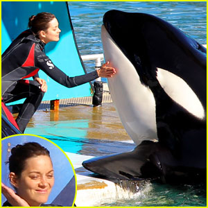 Marion Cotillard: Killer Whale Training for 'Rust & Bone'