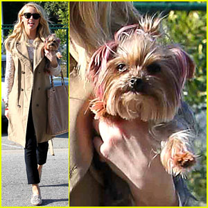 Amber Heard's Dog: Pink Ears!
