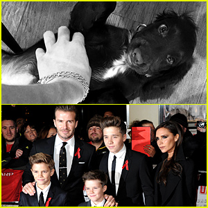 There's a New Addition to the Beckham Family - Meet Puppy Olive!