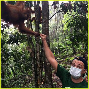 Leonardo DiCaprio Meets an Orangutan, Fights for Animal Welfare in Leuser