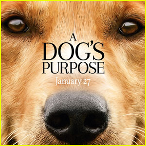 Watch The Touching New Trailer for 'A Dog's Purpose'