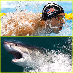 Who Won the Race: Michael Phelps or the Great White Shark?
