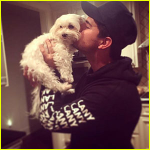 Taylor Lautner Mourns Loss of Beloved Dog Roxy: 'You Have Brought So Much Joy'